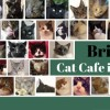Cat cafe You&Meow Cafe to open in January 2017