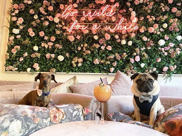 Dachshund Café and Pug Café come to Bristol