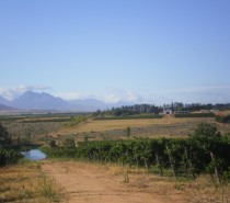 Vondeling Wines, Bryn's trip to South Africa: Part 1