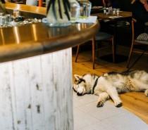 Dog-friendly pub crawl for Bristol this March