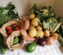 Landgirls Groceries food delivery: Review