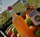 Help turn your surplus apples into Bristolian cider!